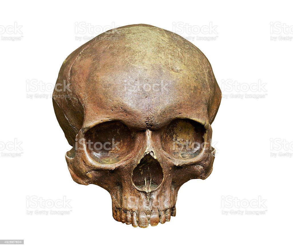 The skull of Homo sapiens sapiens on white background stock photo