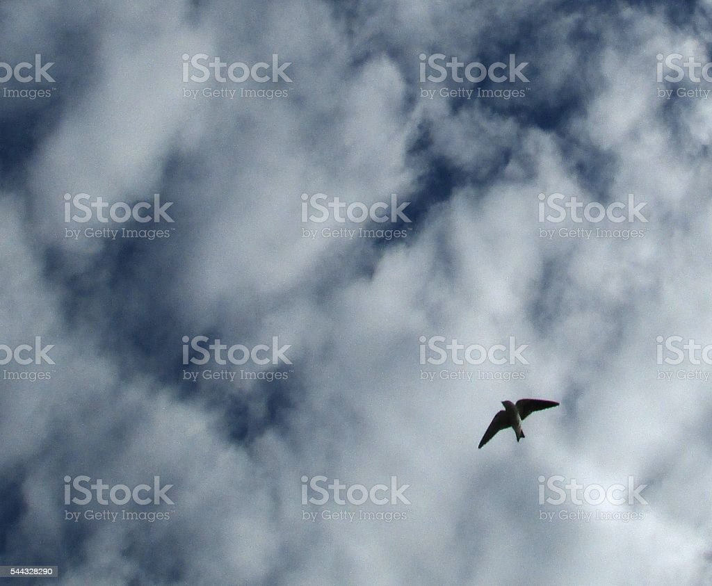 The sky of Amazon is the limit to this little bird! stock photo