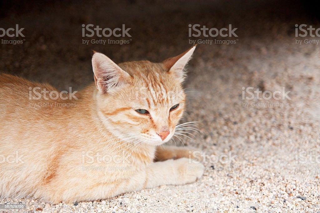 the sleepy Japanese island of cat stock photo