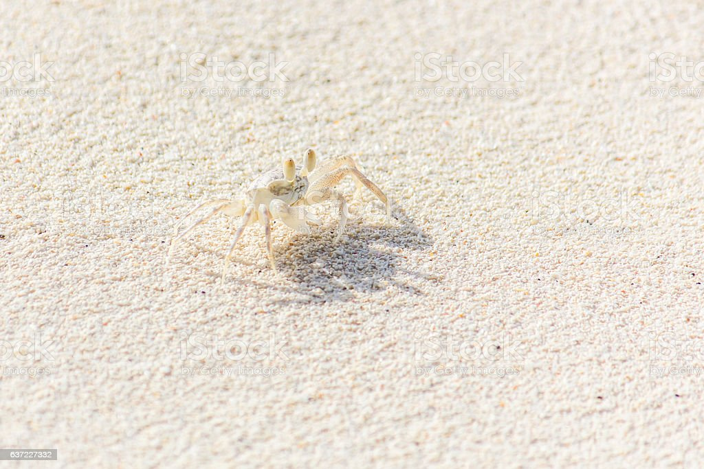 The Small Crab on the Beach stock photo