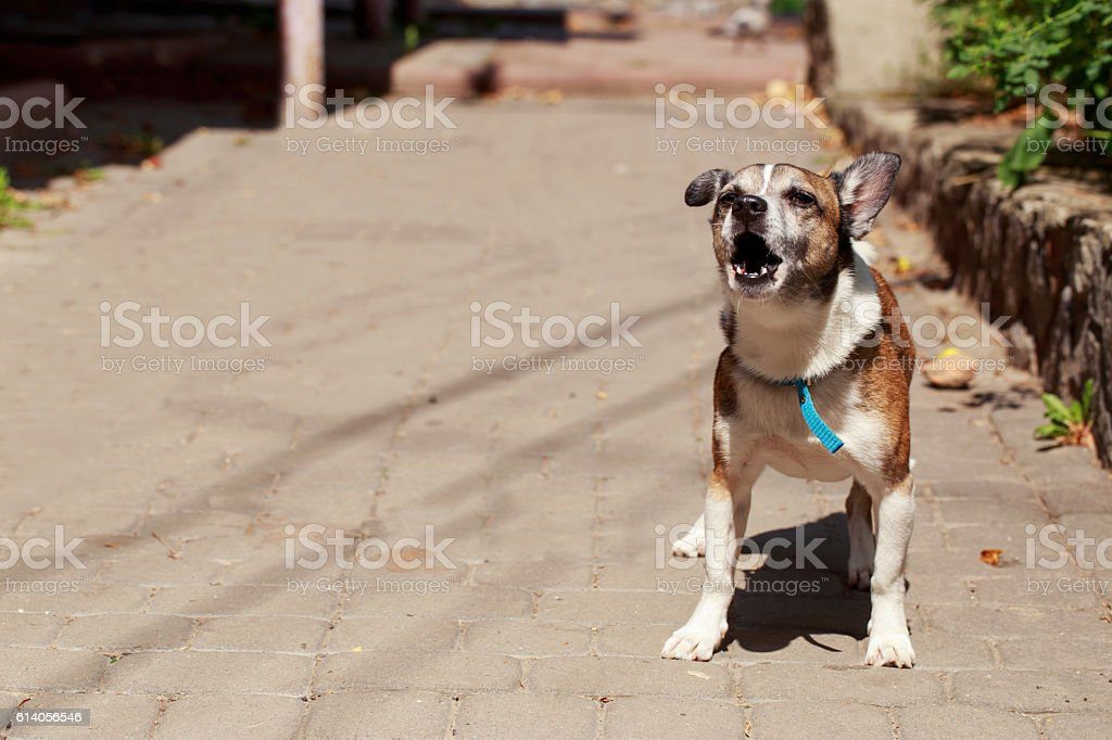 the small dog stock photo