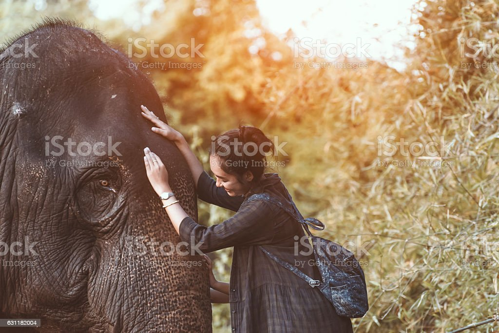 The smiling girl embraces an elephant stock photo