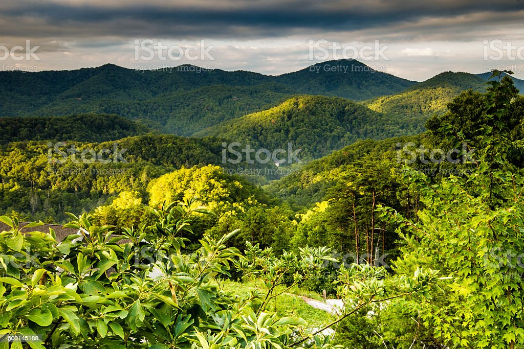 The Smoky Mountains under green foliage stock photo