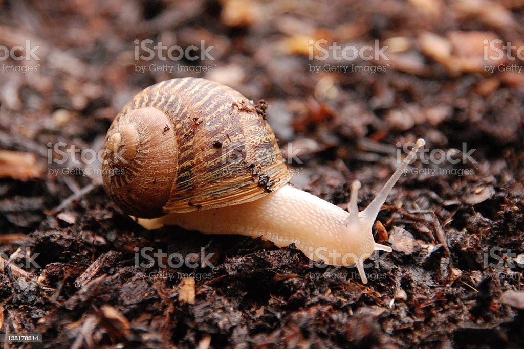 The Snail royalty-free stock photo