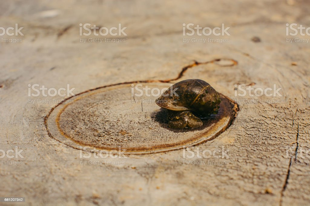 The snail.'n stock photo