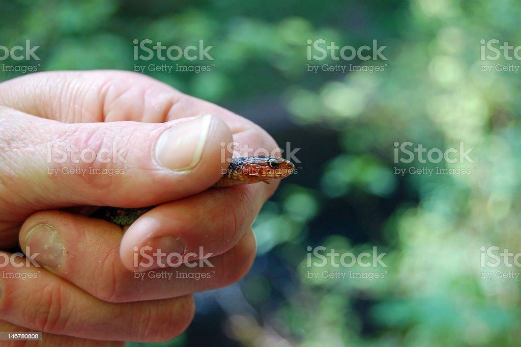 Węża wyjście zbiór zdjęć royalty-free