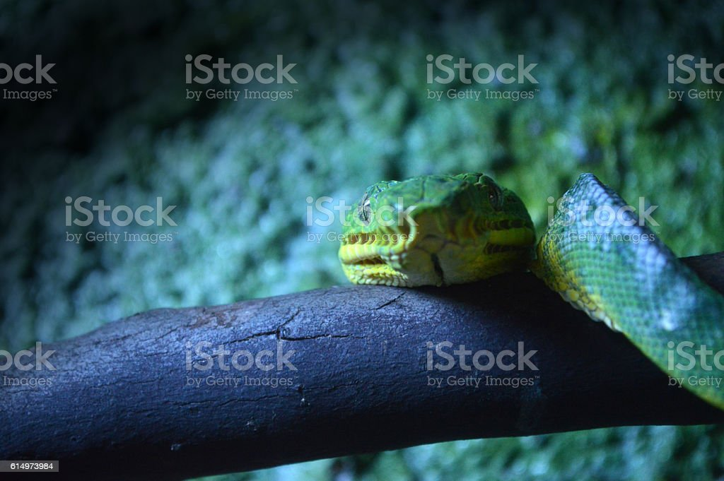 the snake green stock photo