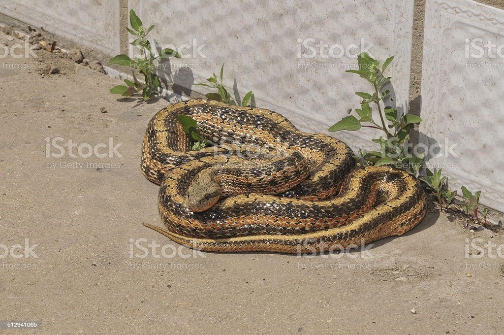 The snake stock photo