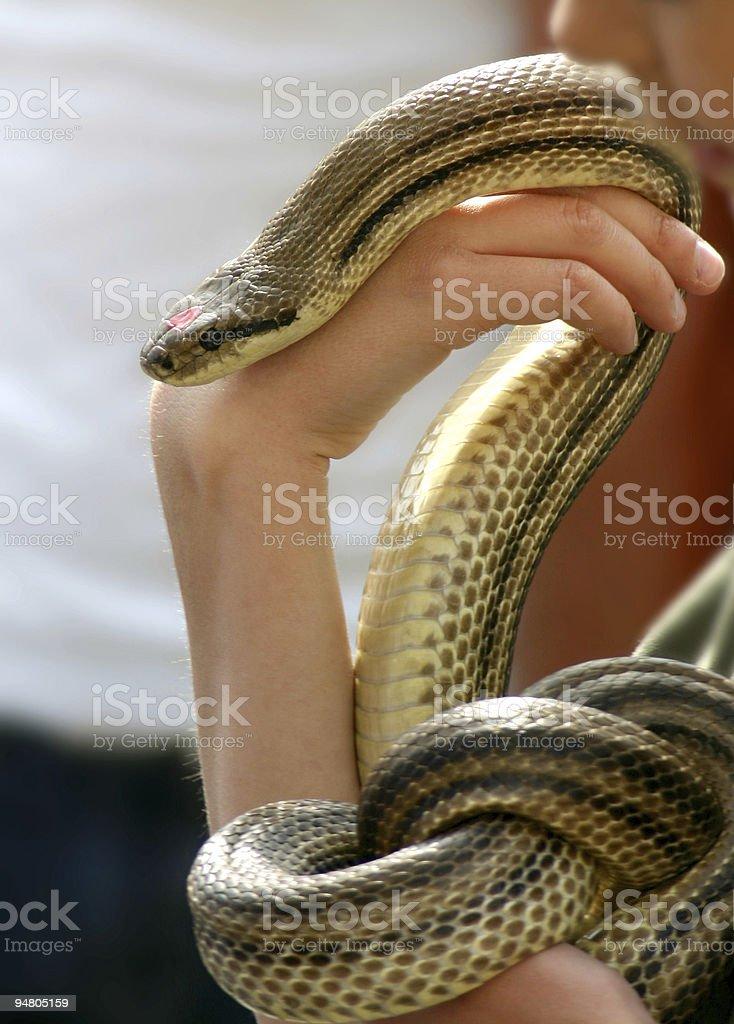 the snake whisperer stock photo