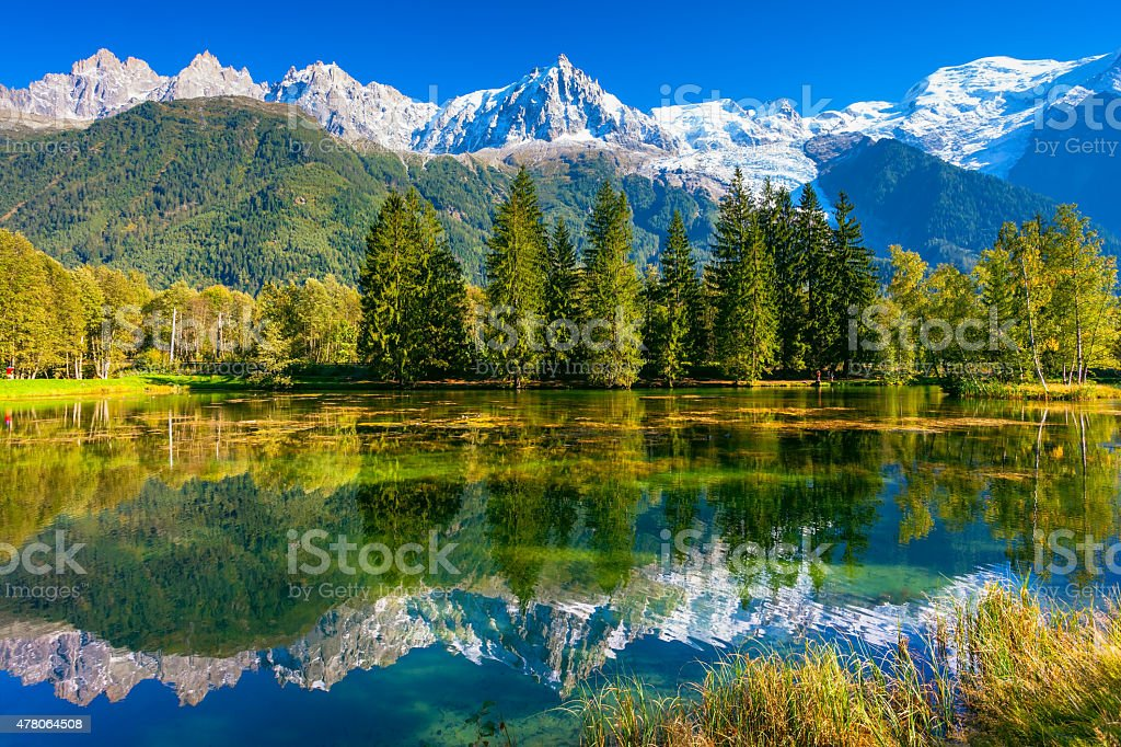 The snow-covered Alps and evergreen fir-trees stock photo