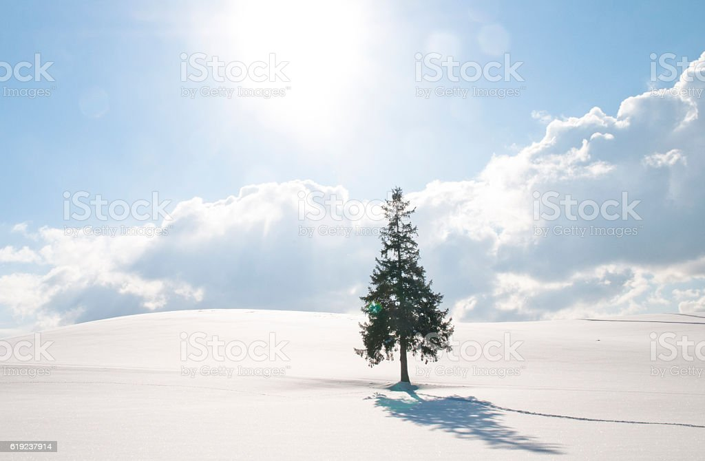 The snowy field where solar light pours into stock photo