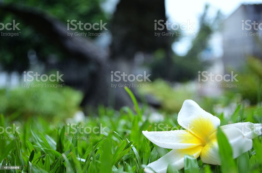 The solitary flower stock photo