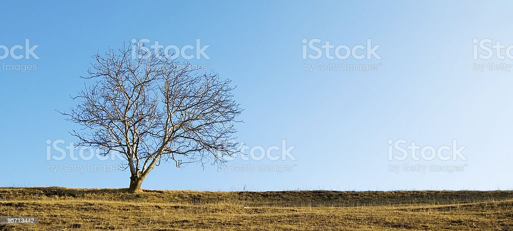 The solitary tree stock photo