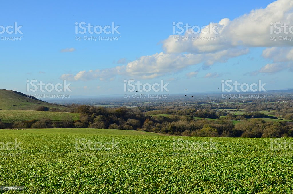 The South Downs National Park. stock photo