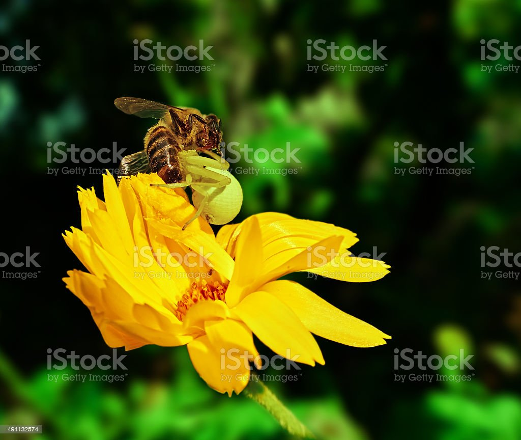 the spider and the bee royalty-free stock photo