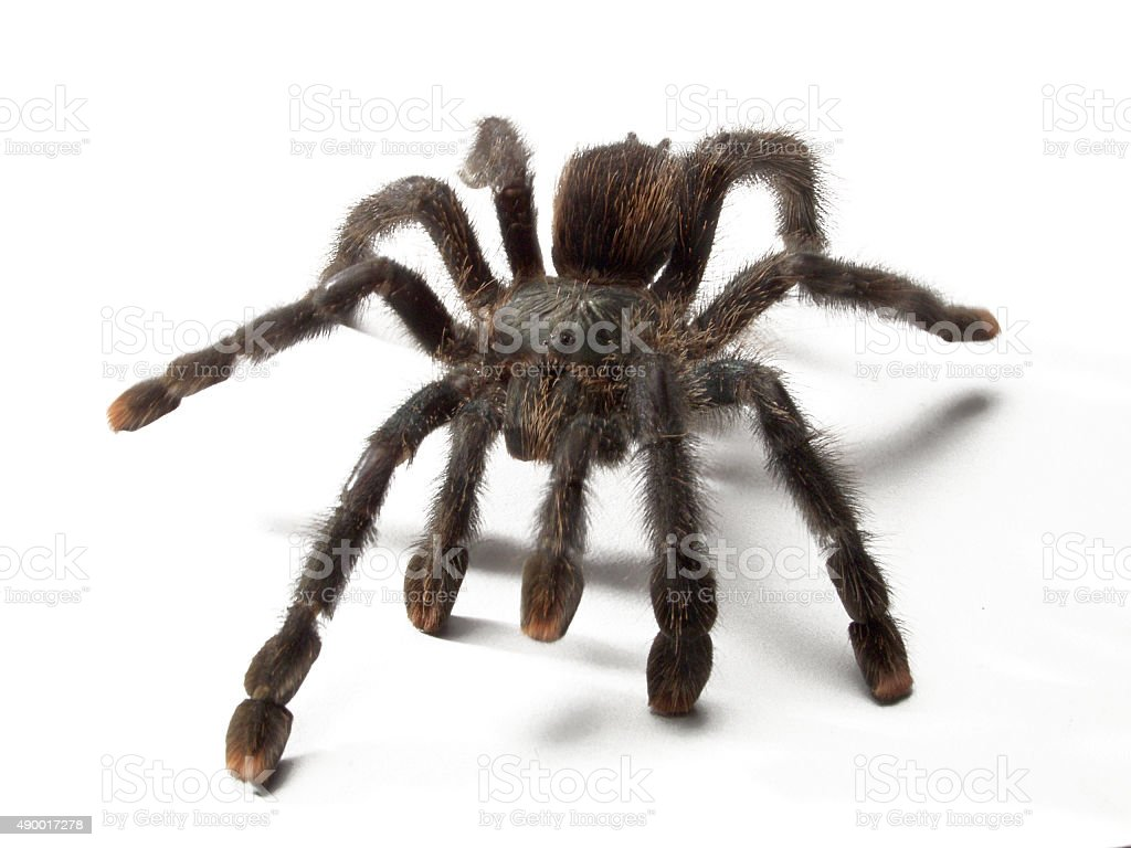 The spider. stock photo