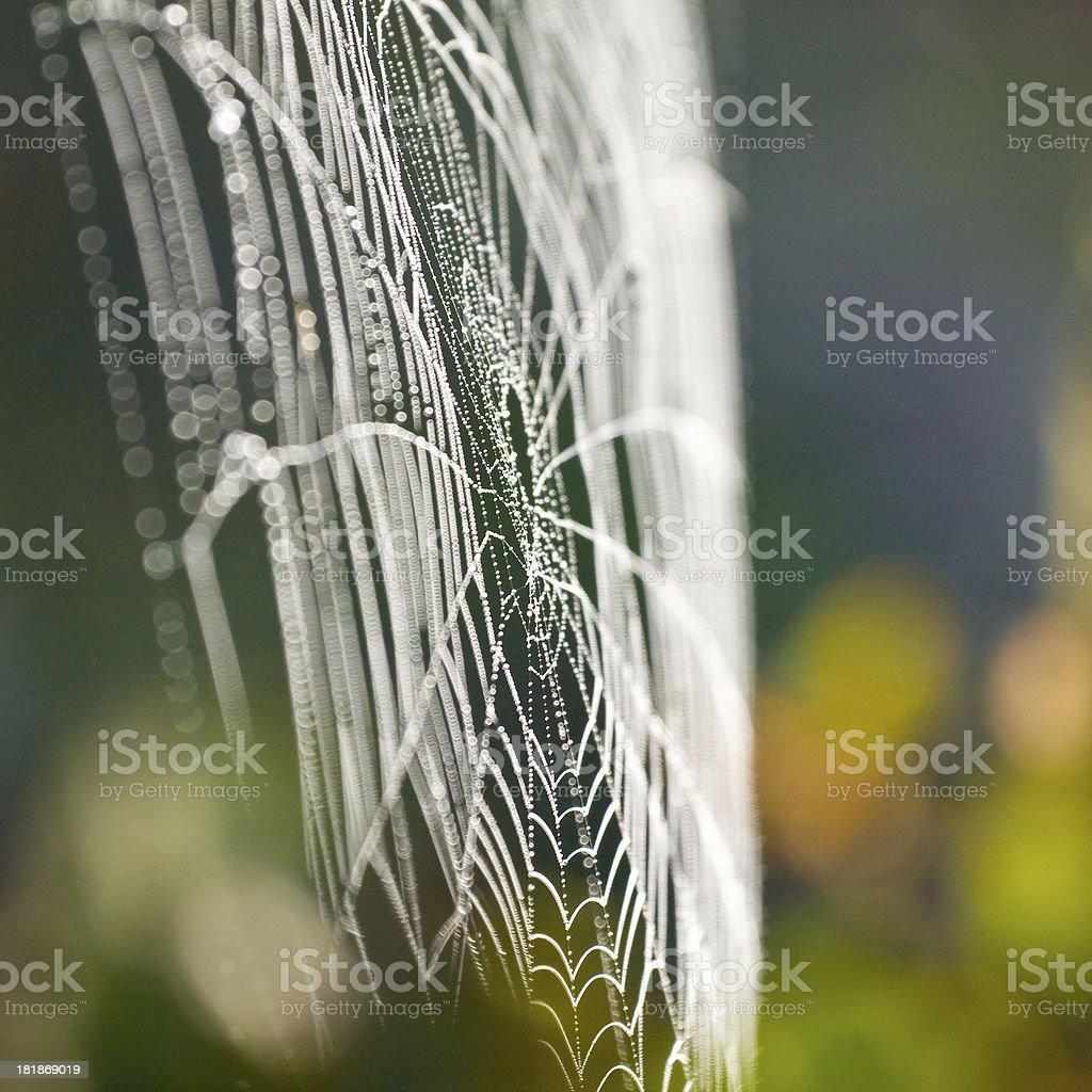 The spider web (cobweb) closeup background. royalty-free stock photo