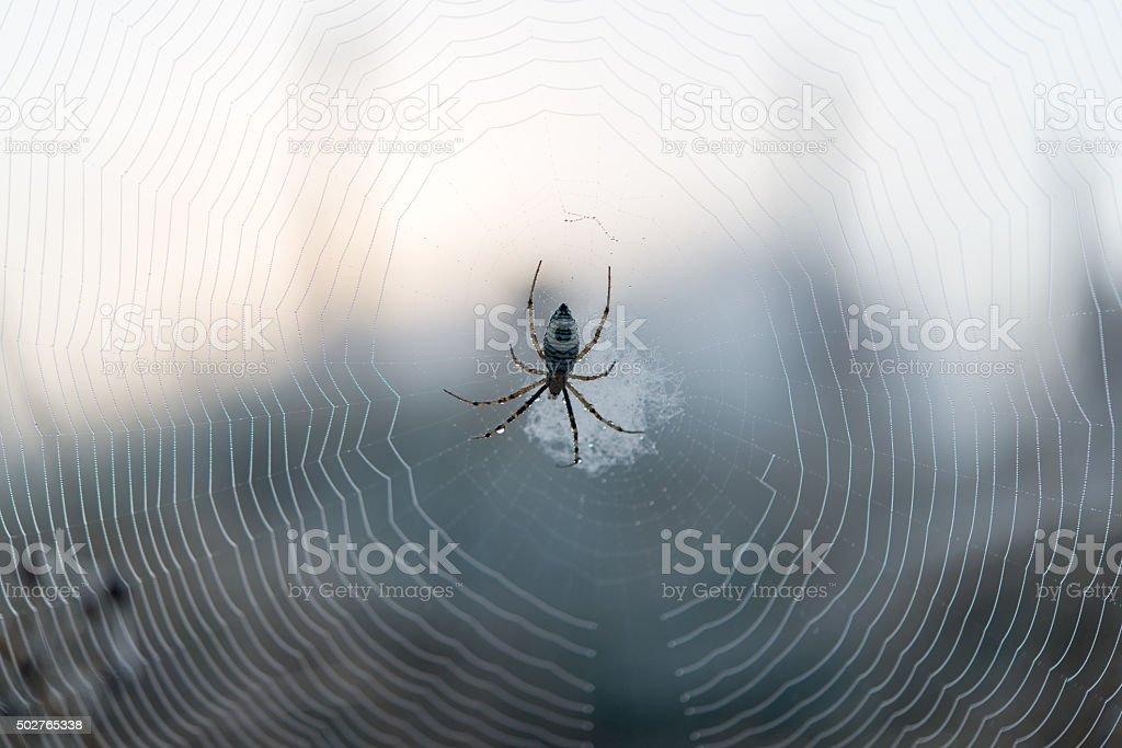 The spider web (cobweb) stock photo