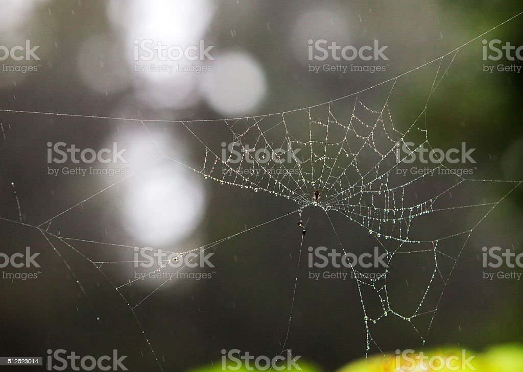 The spider web stock photo