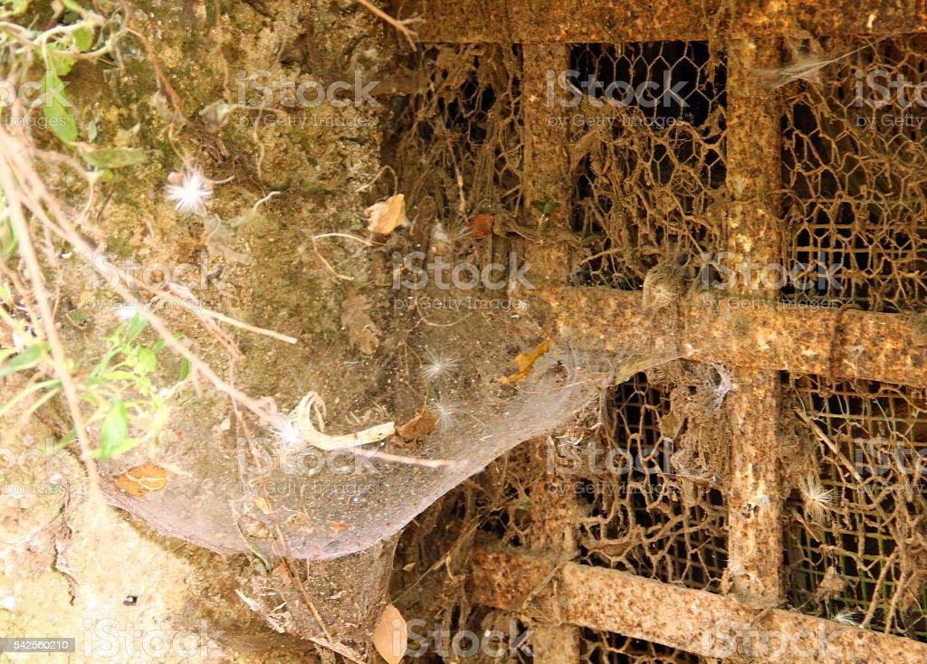 The spiderweb stock photo