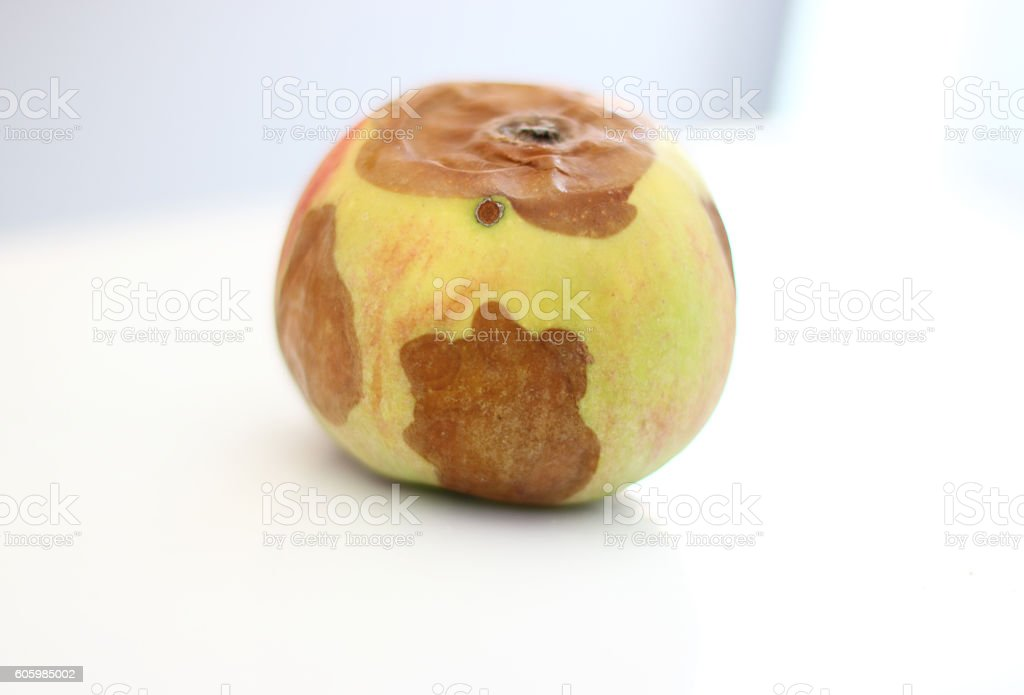 The spoiled apple stock photo