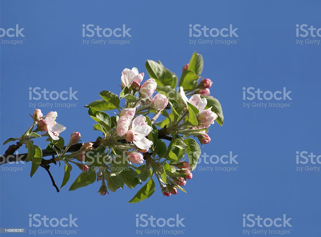 The Spring is coming.... stock photo