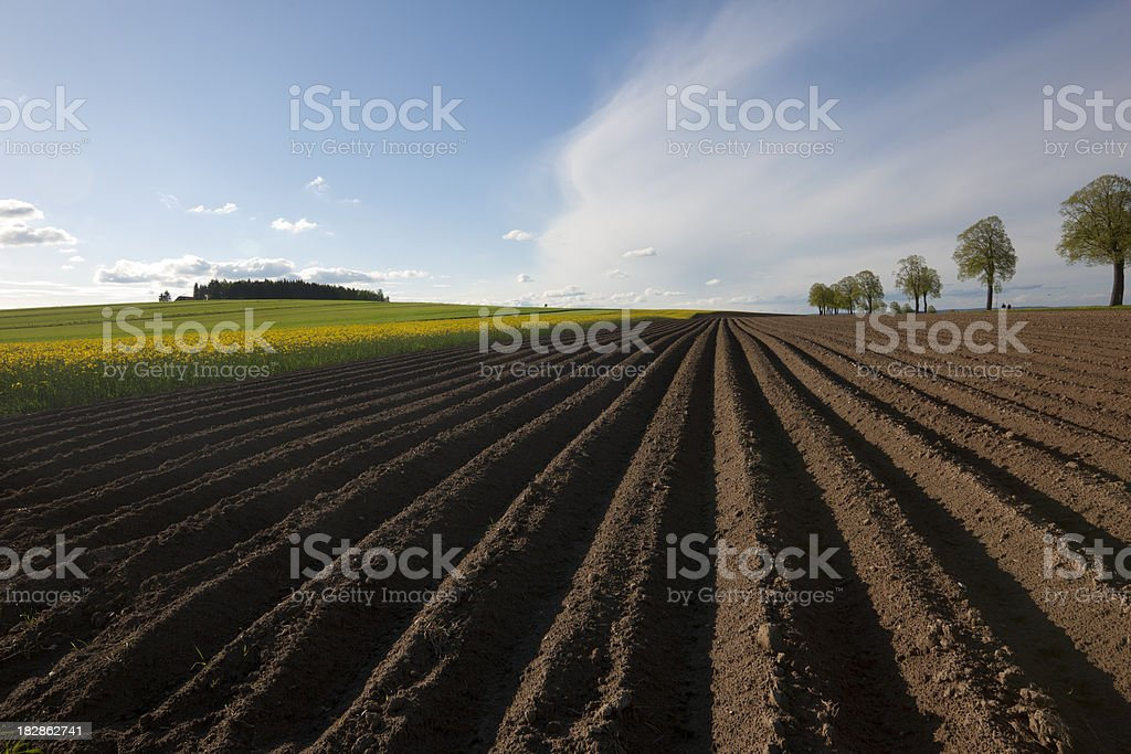 The spring of countryside royalty-free stock photo