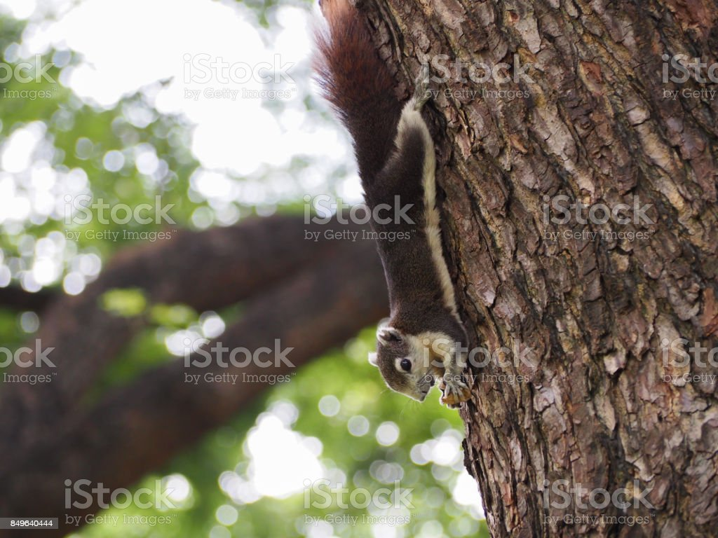 The squirrel are eating nu. stock photo