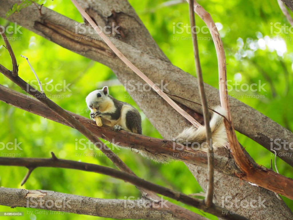 The squirrel are eating nut. stock photo