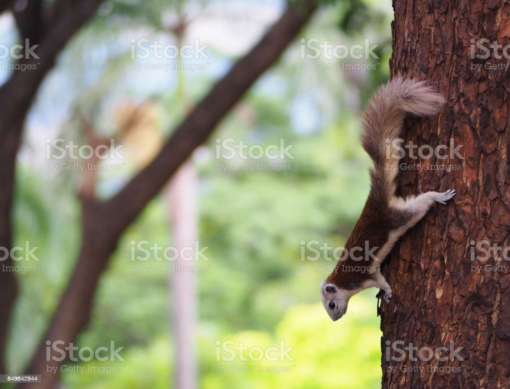 The squirrel are interested in something. stock photo