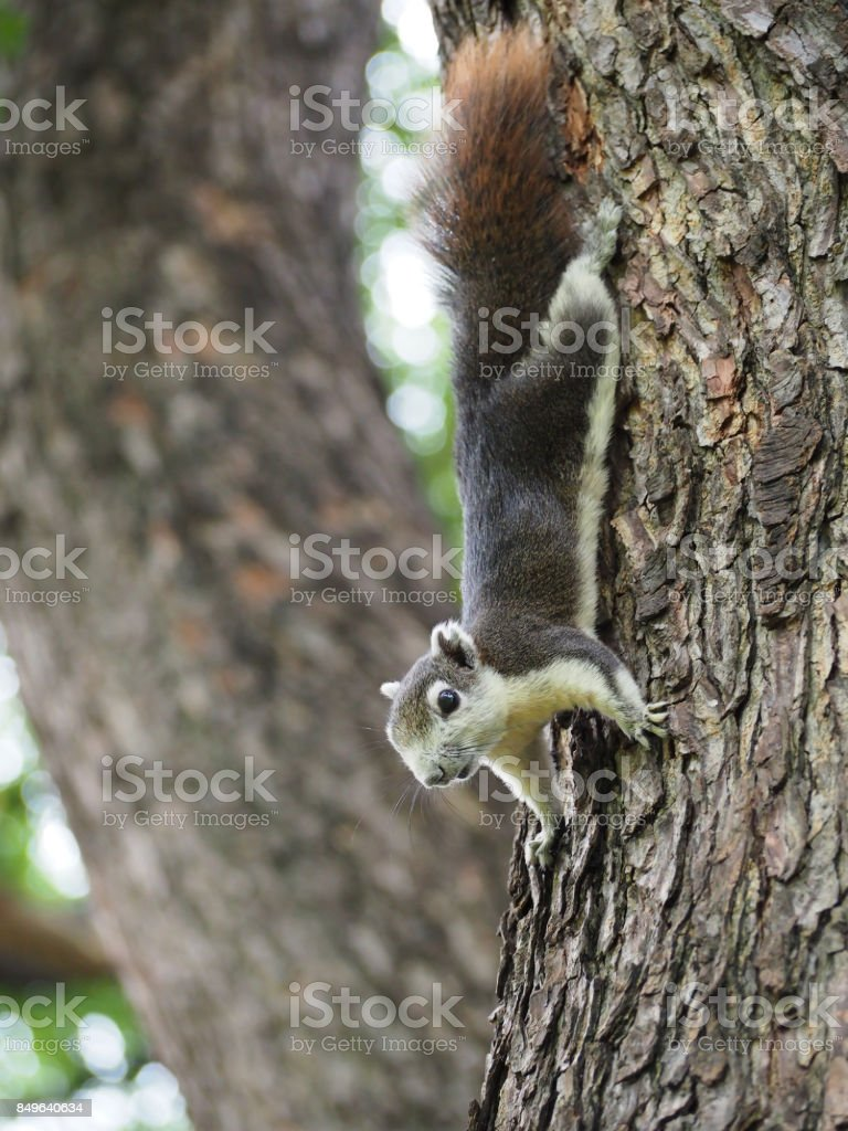 The squirrel are looking for some food. stock photo