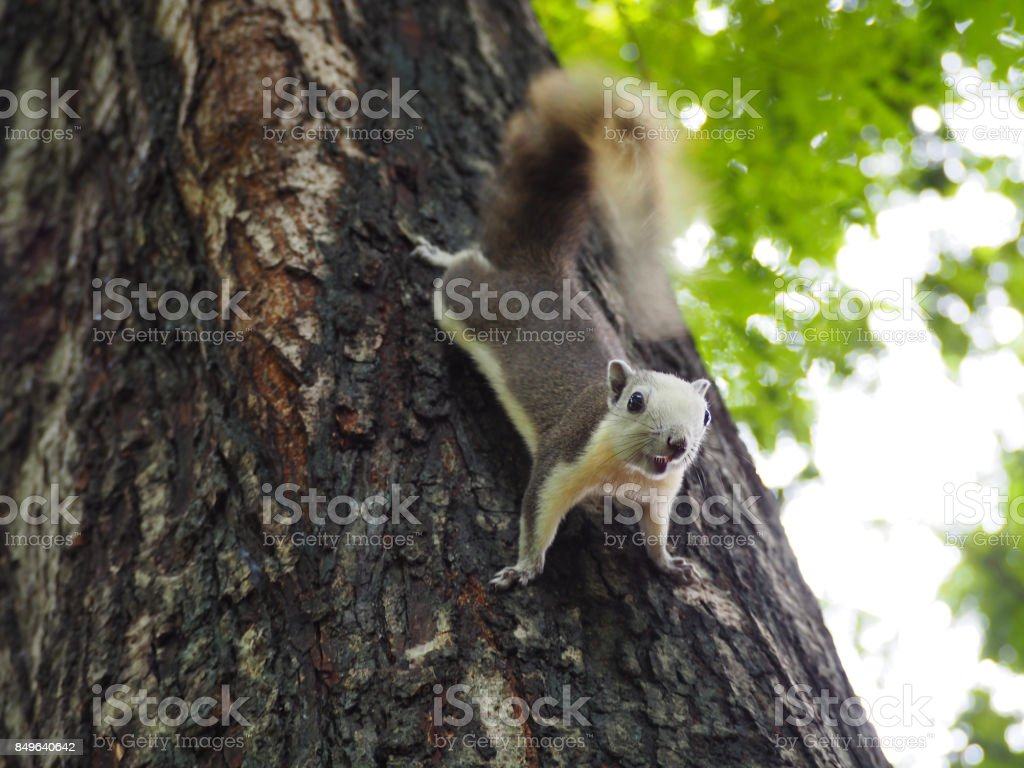 The squirrel are looking some food. stock photo