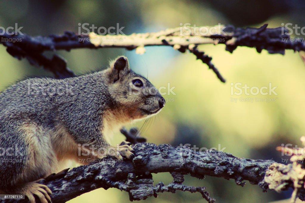 The Squirrel stock photo