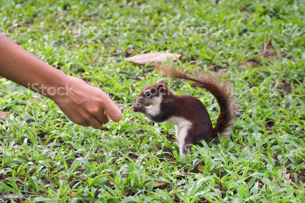 The squirrel thanks the people. stock photo