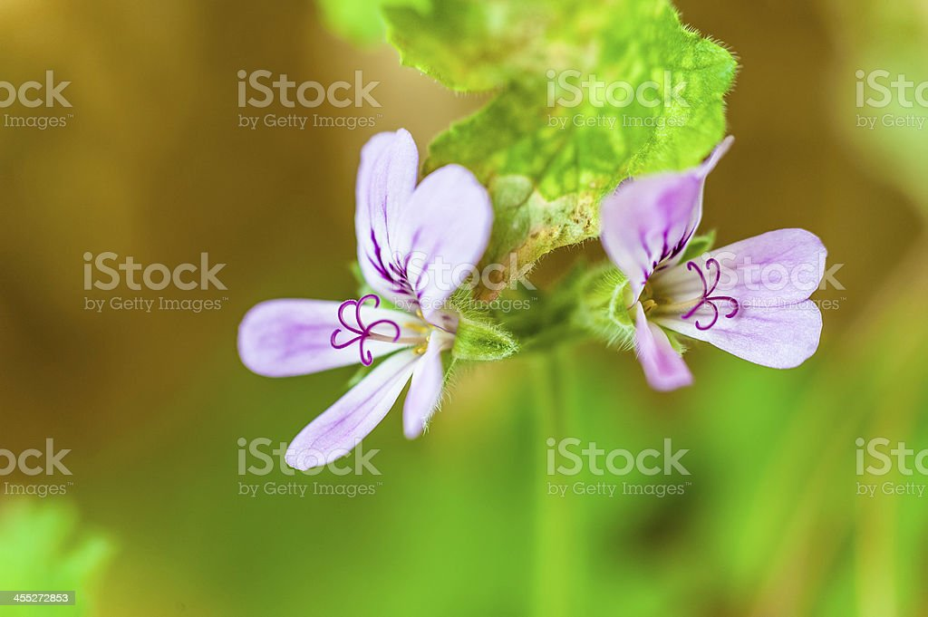 The stamen of a blooming flower stock photo