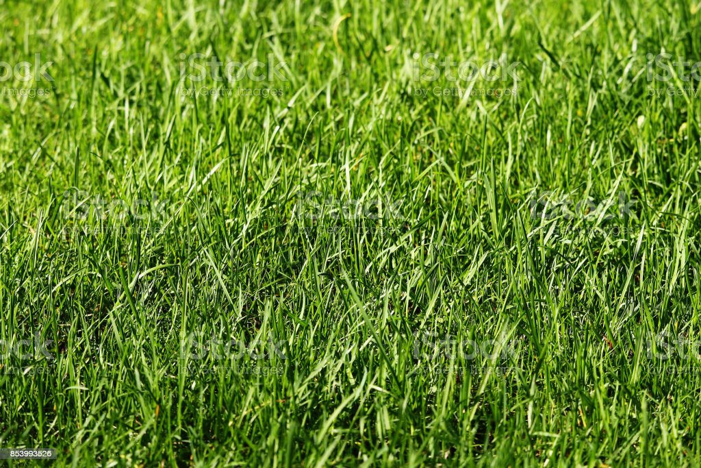 The stems of the growing green grass stock photo