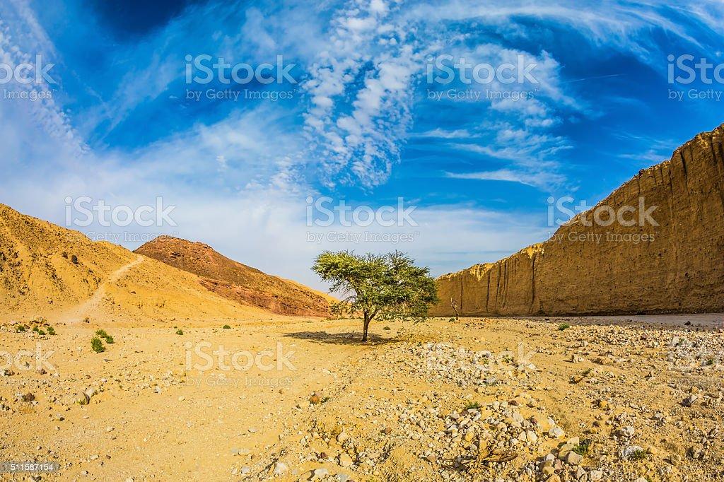 The stone desert stock photo