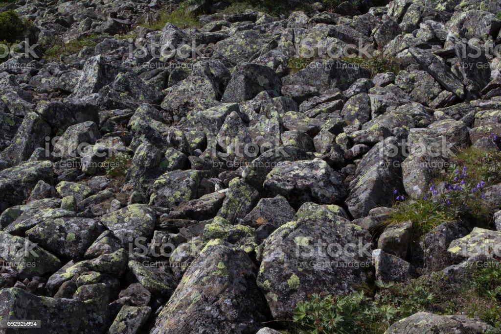 The stone river. Kurumnik - a gray stone placer Northern Urals. Russia. stock photo