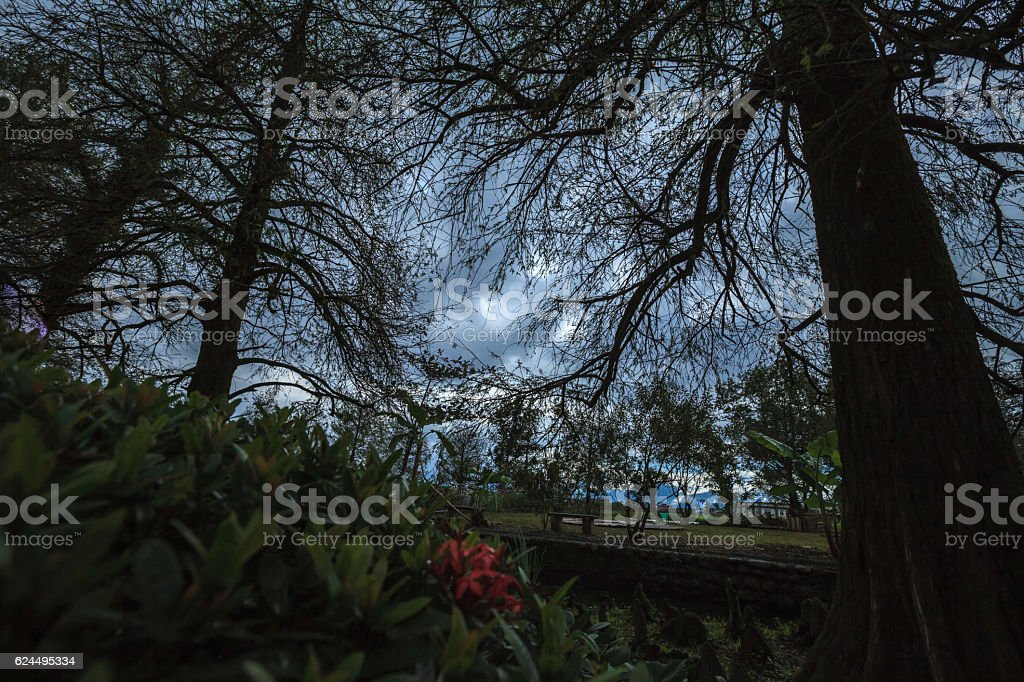 The strange forest and weather stock photo