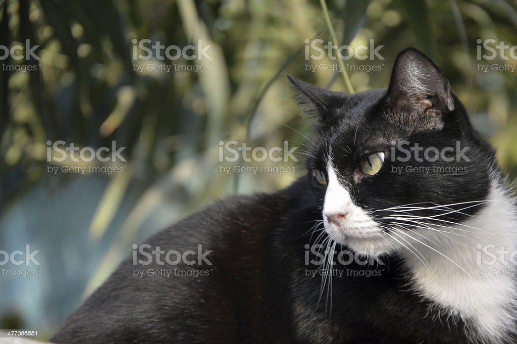 The stray cat. stock photo