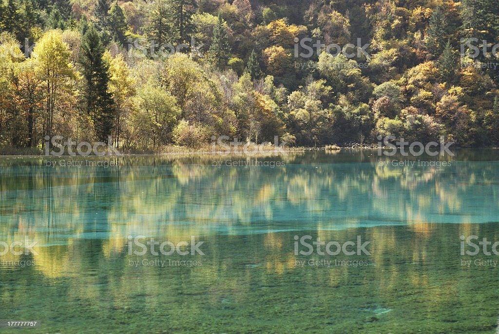 The streaky Lake of China Jiuzhaigou autumn stock photo