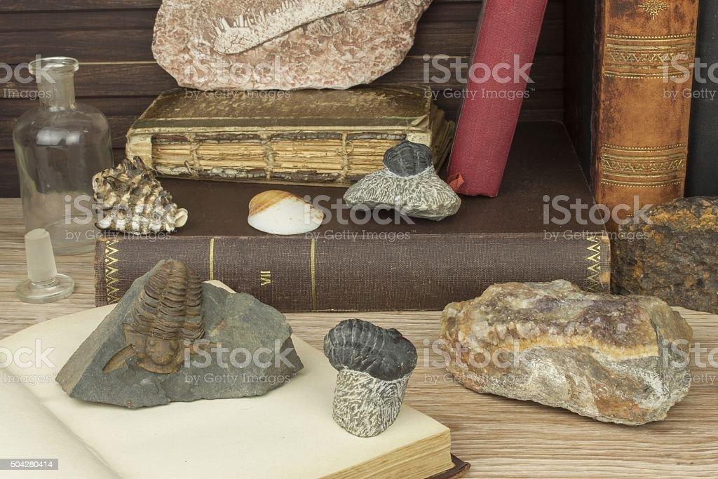 The study of paleontology at the University stock photo