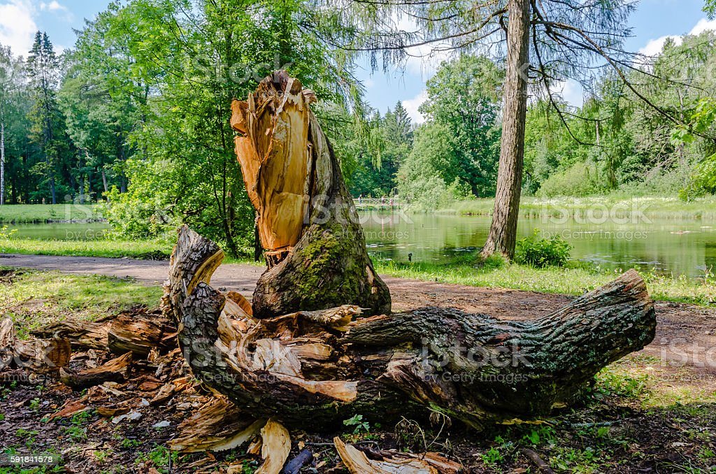 The stump of a sawn tree trunk stock photo