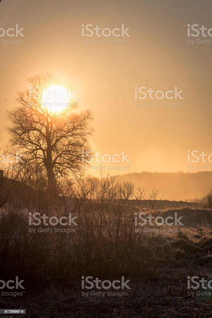 The sun drives the fog from the frozen field, beautifully outlining the silhouette of the tree, the early frosty spring morning stock photo