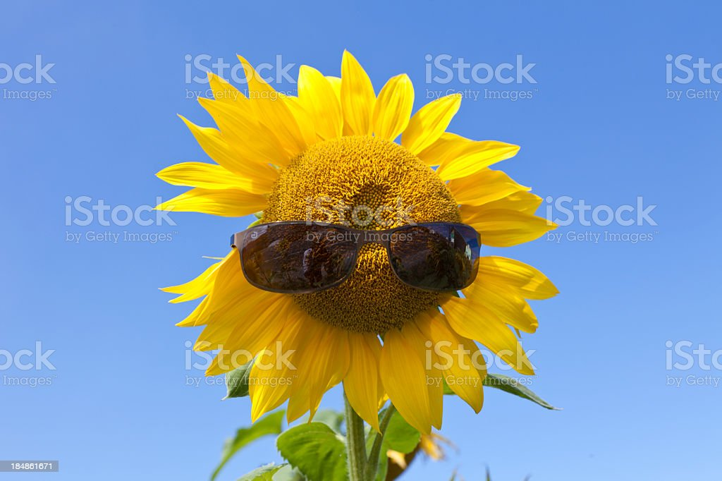 The sun is killing me... royalty-free stock photo