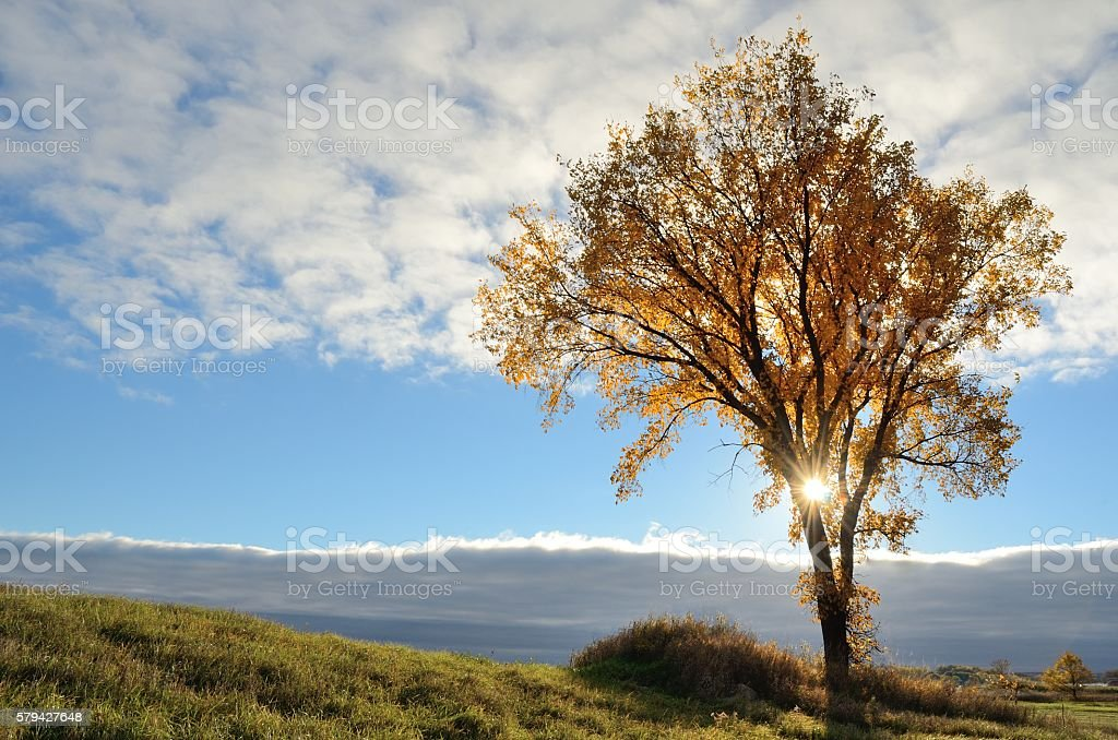 The Sun Shining Through a Tree in the Fall stock photo