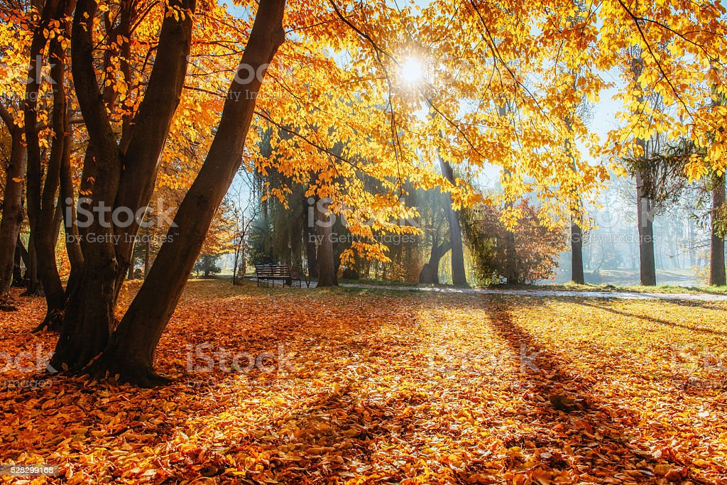 The sun's rays pass through trees in the park. stock photo