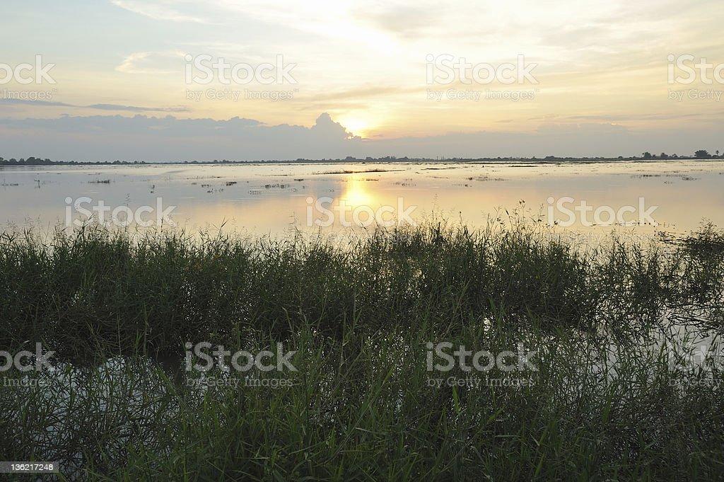 The sunset light royalty-free stock photo