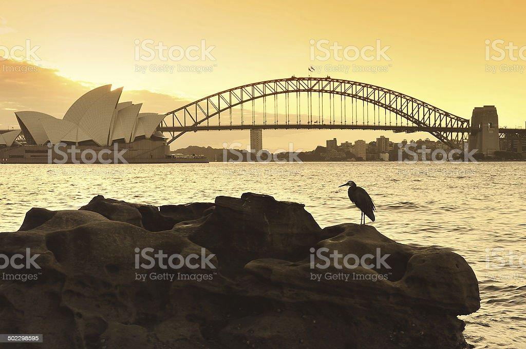 The Sydney skyline stock photo