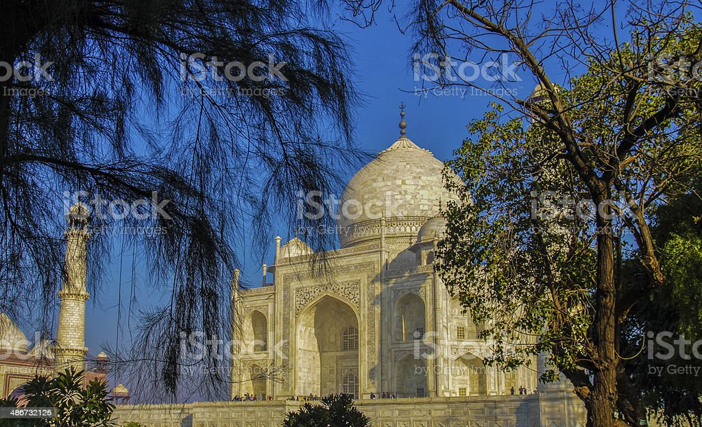 The Taj seen Through Trees stock photo